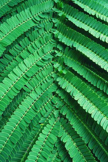 Detail shot of leaves
