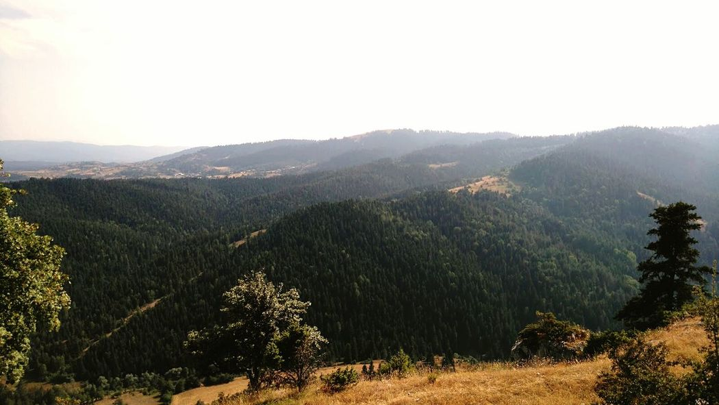 Forest Oxygen Deepbreath