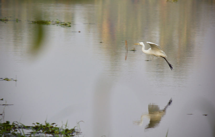 Animal Animal Themes Animal Wildlife Beauty In Nature Bird Egret Heron Lake Natural Beauty Nature Outdoors Reflection Scenery Scenics Shadow Tranquil Scene Tranquility Water Water Reflections Waterfront Wild Wildlife Wildlife & Nature Vella Kokku