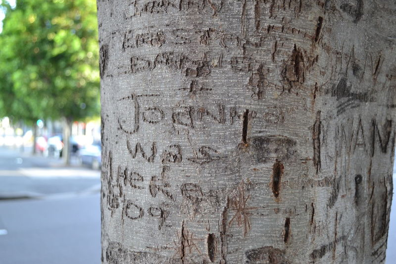 Close-up Day Nature No People Outdoors Textured  Tree Tree Trunk Wood - Material Carved In Wood Graffiti MariNelson Adapted To The City Live For The Story The Street Photographer - 2017 EyeEm Awards