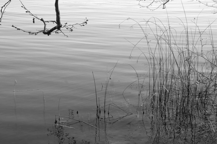 Water Lake Water Reflection Nature Beauty In Nature Tranquility Canonphotography Photographing Tranquil Scene Landscape LoveNature Nature Photography Banyoles Girona Banyoles Estany De Banyoles