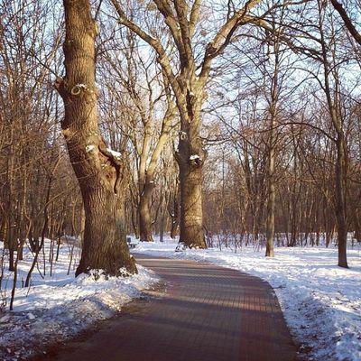 .... И рады мы, проказам матушки-зимы (с) говоря мимишным йазыком Пушкина сырец зима дневник_наблюдателя Syrets winter