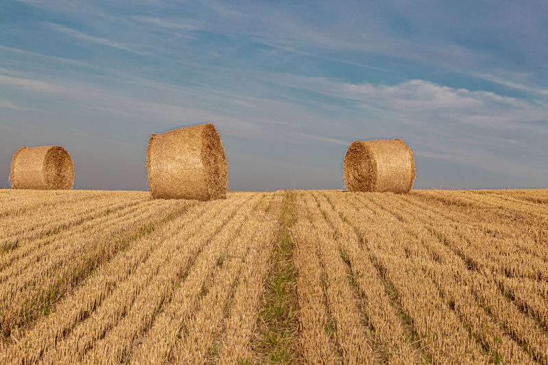 Hay bales in a sussex field on a sunny summers evening