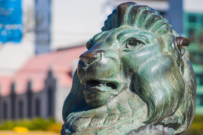Close up image of one of the two bronze Lions located at the Cenotaph in Wellington, New Zealand. ANZAC Anzac Day Bronze Icon Leo Lion Memorial Nature Wellington  Animal Art And Craft Cenotaph Close Up Close-up Day Focus On Foreground Human Representation Landmark Male Likeness New Zealand No People Outdoors Sculpture Statue