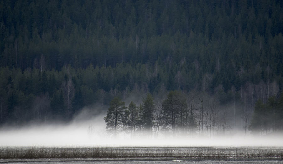 Beauty In Nature Fog Forest Growth Haze Hello World Idyllic Lake Landscape Nature No People Non Urban Scene Non-urban Scene Outdoors Scenics Sky Tranquil Scene Tranquility Tree Water Weather WoodLand