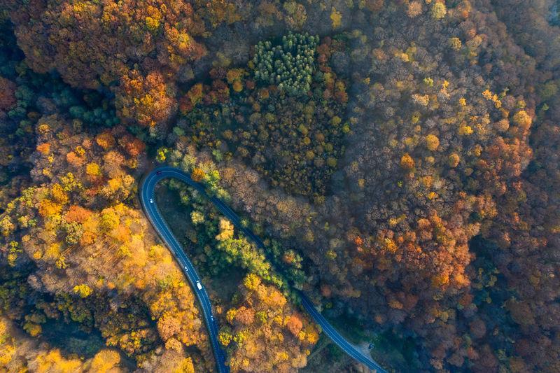 Autumn Aerial