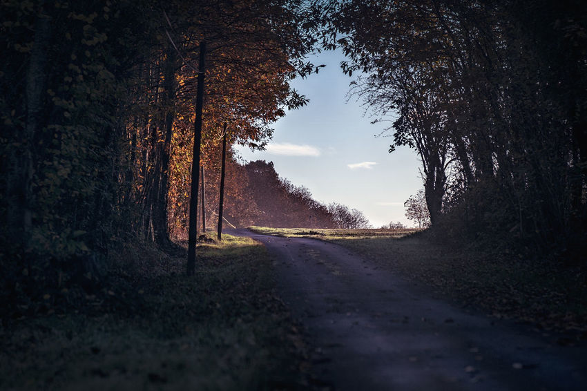 Tree Plant Road Direction Transportation The Way Forward Sky Nature No People Growth Diminishing Perspective Tranquility Tranquil Scene Beauty In Nature Day vanishing point Non-urban Scene Land Empty Road Outdoors Long