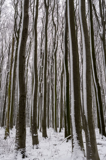 The Wienerwald around Vienna in Winter after the first snow. Autumn Autumn colors Autumn The Great Outdoors - 2018 EyeEm Awards Trees Winter Winter Colors Foggy Foggy Trees Forest Forest In Winter Trees In Winter Woods Woods In Fog Woods In Winter