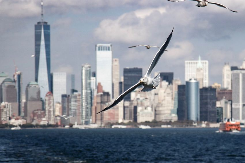 EyeEm Best Shots Sea New York City Skyscraper City Architecture Building Exterior Cityscape Sky Bird Urban Skyline Flying High