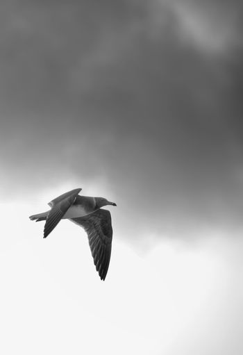 Bird Fly High Blackandwhite Alone Travel Simple Sad