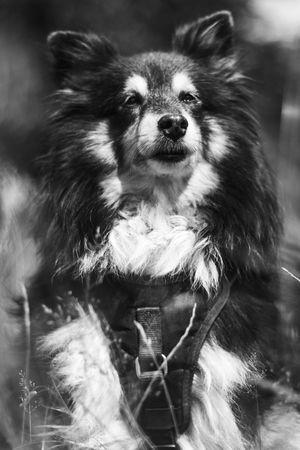 Animal Blackandwhite Dog Nature Park Portrait Summer Sun