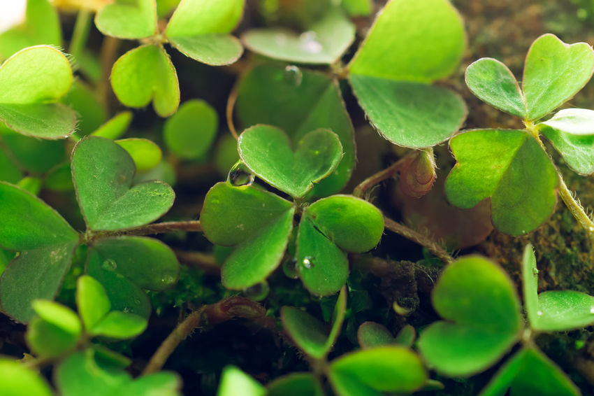 Beauty In Nature Close-up Day Fragility Freshness Green Color Growth Leaf Nature Plant