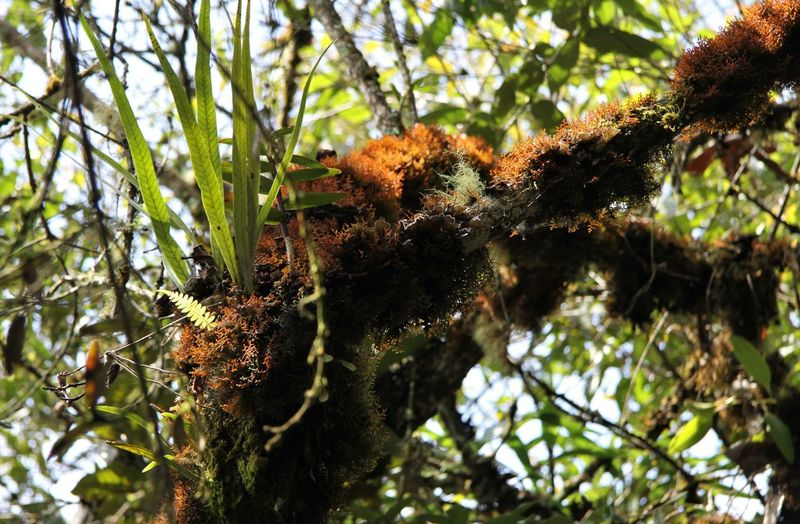 Low angle view of lichen on tree