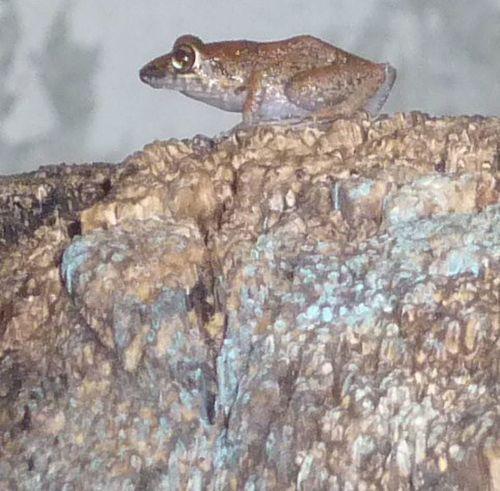 Rana1 Animales Animal_collection Rana