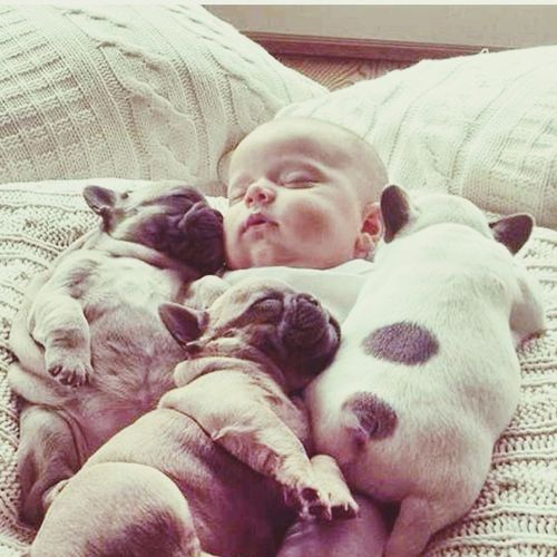 Dog Baby Goodnight✌