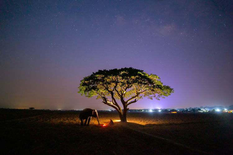 View of tree on field against sky at night