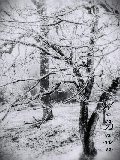 Only Men Cold Temperature Outdoors Day Tree Winter One Person Nature One Man Only Snow Real People Adult Adults Only People Men EyeEm Gallery PhonePhotography Nature On Your Doorstep No People Eyemnaturelover Freshness Blackandwhite Snowing ColdMorning Overedited