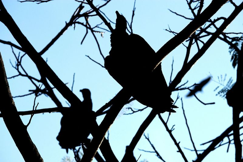 """Weiting"" Animals In The Wild Low Angle View Contrast Bird Sky Outdoors Silhouette"