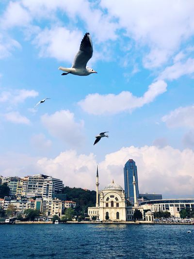 Coastal scenery of Bosporus Bosporus Mosque Architecture Mosque EyeEm Selects Vertebrate Flying Animal Themes Bird Animal Animals In The Wild Animal Wildlife Sky Building Exterior Cloud - Sky Water Architecture Built Structure City Mid-air Group Of Animals Spread Wings Nature No People Seagull