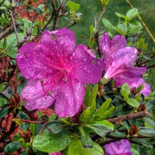 Spring Flowers Spring Showers Beautiful Raindrops No People Bryantown MD