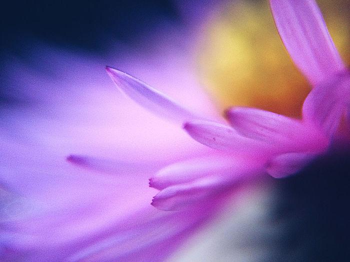 💗 Flowering