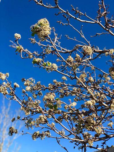 Plant Sky Low
