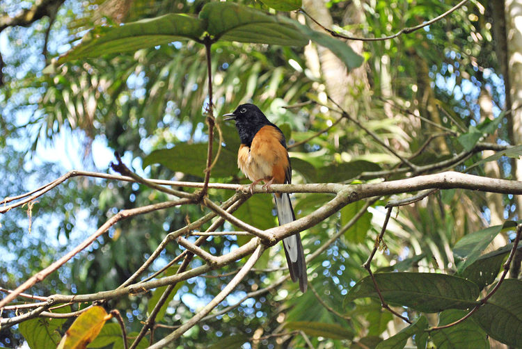 Animal Themes Animal Wildlife Animals In The Wild Beauty In Nature Bird Branch Day Focus On Foreground Growth Leaf Low Angle View Nature No People One Animal Outdoors Perching Tree