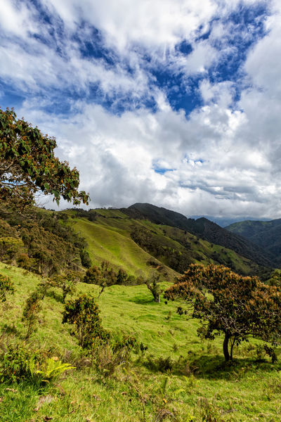 Portrait view of a valley in the mountains outside of Salento, Colombia. Cloud Colombia Farm Hiking Palm Pasture Quindío Rural Tree Trip Andean Cauca Colombian  Countryside Forest Hike Jeep Landscape Outdoors Quindío Salento Tolima Tree Trek Wax