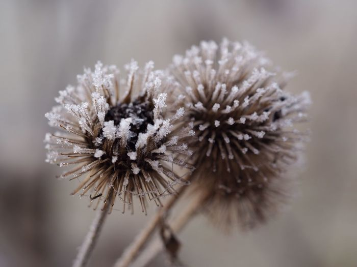 flower Beauty Of Nature Flower Fragility Nature Close-up Focus On Foreground No People Flower Head Beauty In Nature Winter Freshness Outdoors Day