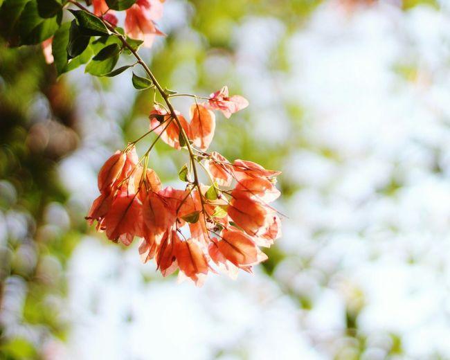 Branch Close-up Kabini Junglelodge