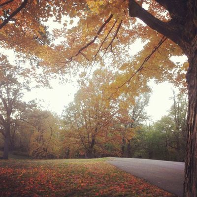 Yellow. Fall Autumn Trees Leaves Orange Yellow Colors Warm Wind Beauty
