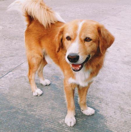 Dog Cute 犬 かわいい