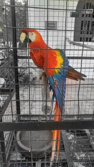 A 2nd visit to Mr. Parker. beautiful bird. EyeEm Gallery EyeEm Best Shots EyeEm Birds Of EyeEm  Philippines Pintoartmuseum Old Bird Colorful Animal