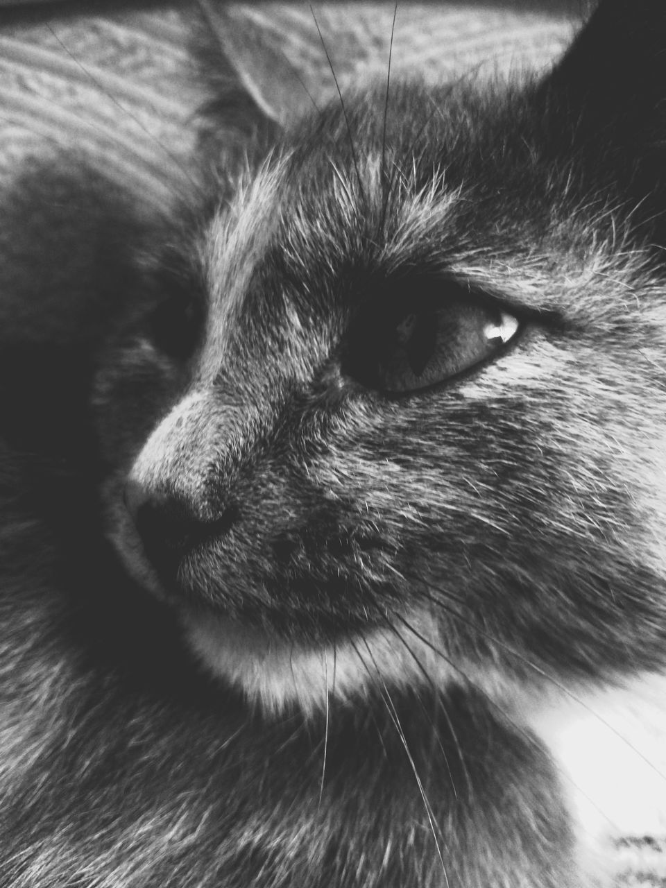 mammal, one animal, animal, animal themes, pets, domestic, domestic animals, vertebrate, close-up, cat, animal body part, feline, domestic cat, no people, animal head, looking away, relaxation, whisker, animal hair, looking, animal eye, snout, animal nose