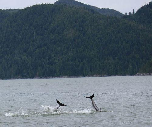 Delphin Delphins Wild Animal Animal