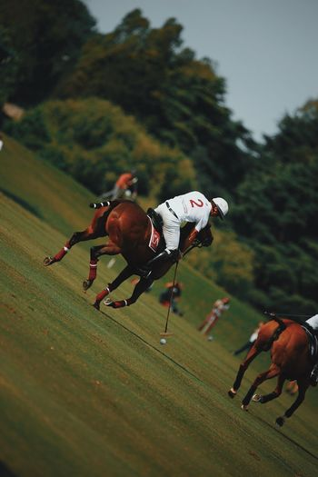 Domestic Sport Mammal Running Domestic Animals Pets Horse Livestock People Competition Plant Real People Speed Nature Motion Activity Horseback Riding Full Length Outdoors Aggression