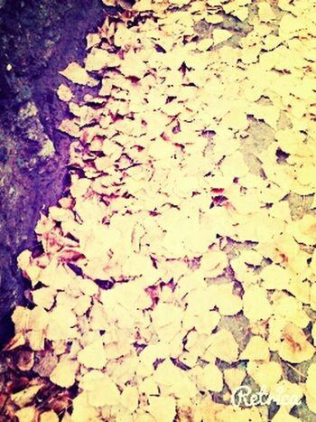 Autumn Leaves ^^ First Eyeem Photo