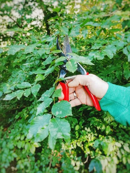 Garden Garden Photography Gardening Autumn Weather ScissorHands Scissors Leaf Human Hand Close-up Plant Botanical Gardening Glove Gardening Equipment