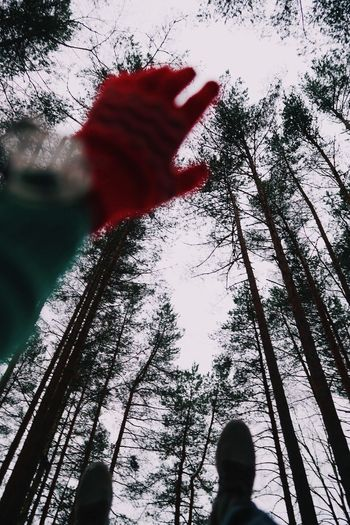 Winter Forest Tree Plant Low Angle View One Person Real People Leisure Activity Lifestyles Day Nature Men Outdoors Sky
