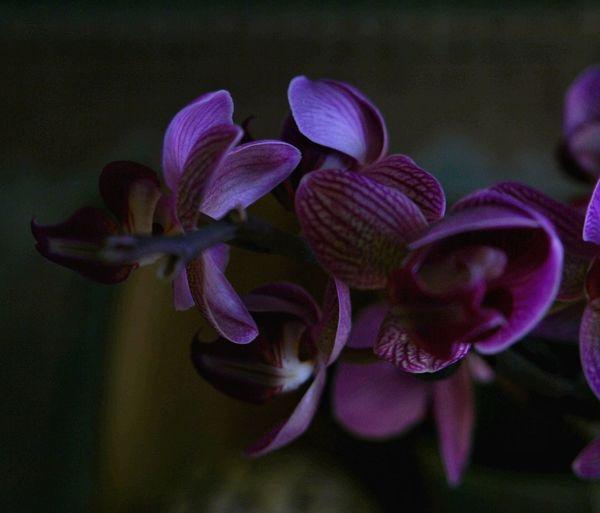feliz lunes !!! Flower Purple Petal Beauty In Nature Fragility Nature Growth Plant Flower Head