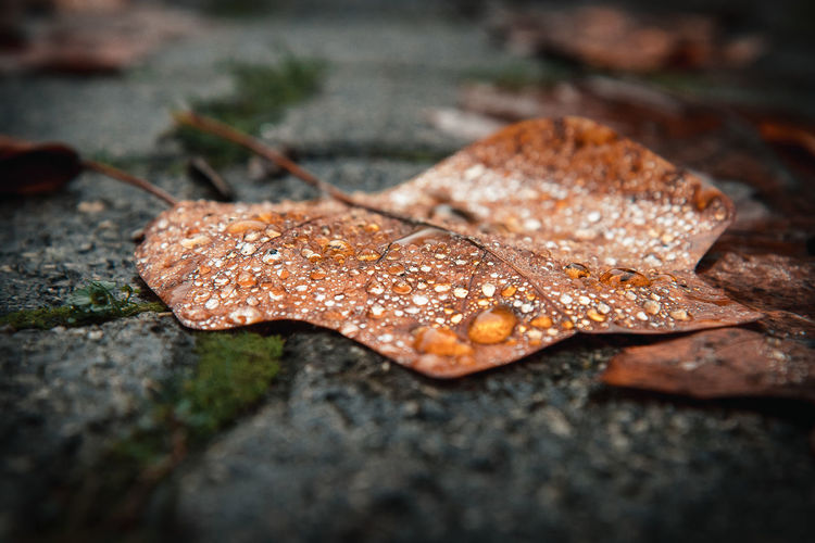Close-up of dry leaves on wet path