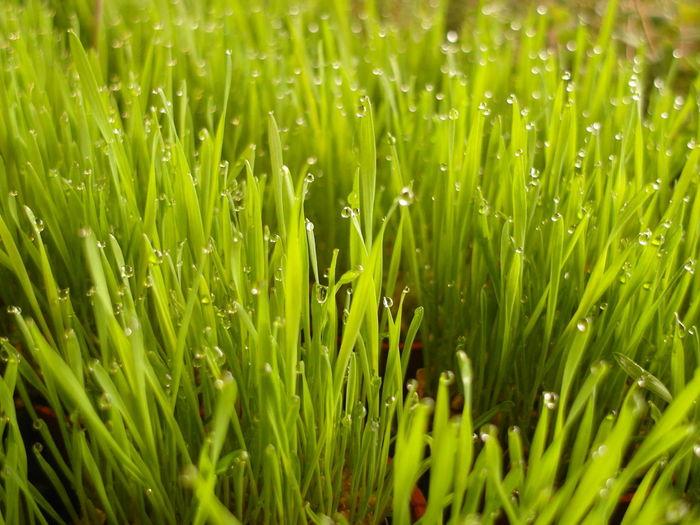 Full frame shot of wet grass on field