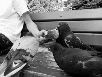 Animal Themes Doves City Rostov-on-Don площадь птицы город голуби Square кормитьголубей Monocrome