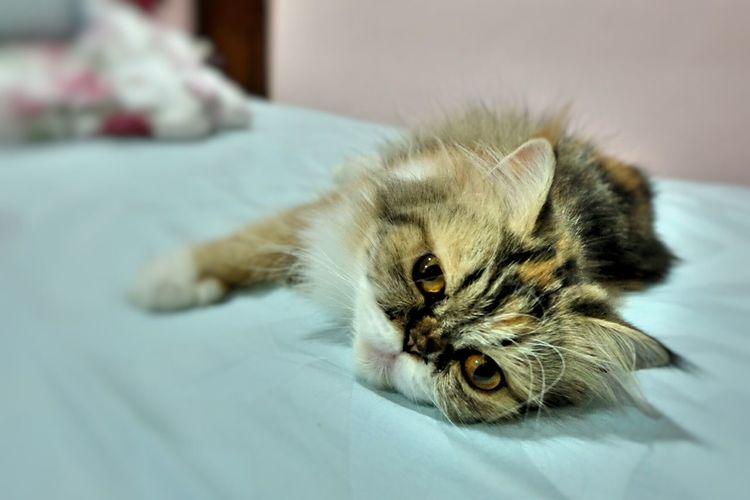 Lily, my little princess Cat Pet Cute Pets Cute Cat 😻 Cat Lovers Cats Of EyeEm