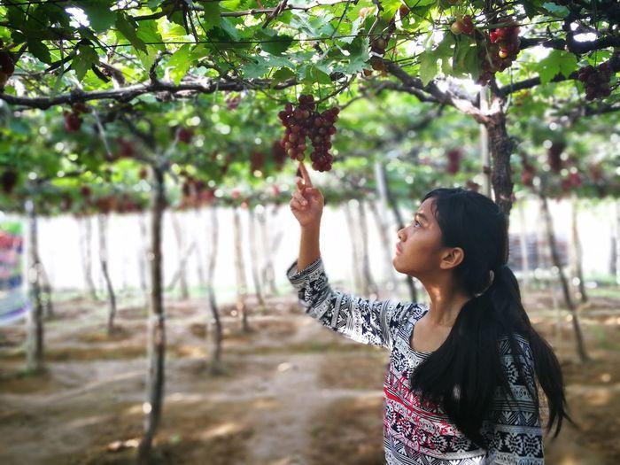 Teenage girl looking at fruits on tree