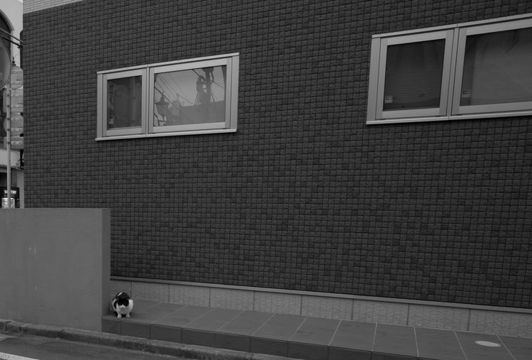 a stray cat in town Animal Black And White Glass - Material Japan Reflection Stray Cat Street Cat Street Photography Streetphotography Wall