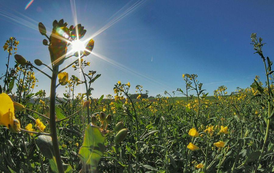 Enjoying The Sun Rapsfeld Fisheye Beautiful Nature Flower Spring Love Landscape_Collection