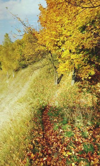 Golden autumn Autumn Leaves Lvivgram EyeEm Best Shots