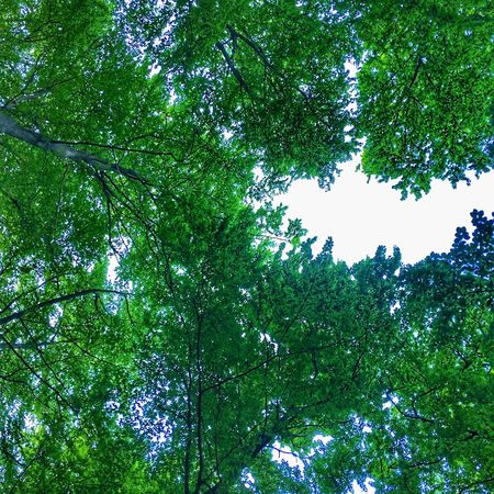 Sky EyeEm Nature Lover Tree Plant Low Angle View Green Color Growth No People Beauty In Nature Nature Outdoors Backgrounds Leaf Lush Foliage
