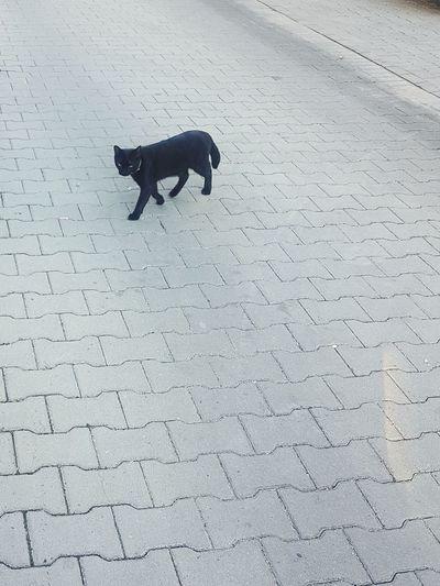 Cat Cat♡ Cats